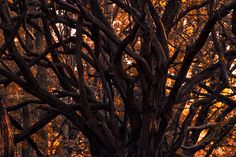 Branch Out by austinuk