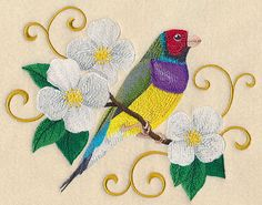 Gouldian Finch with Filigree