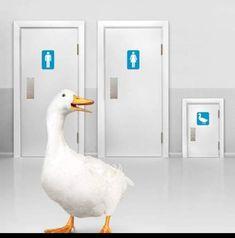 Life Insurance Agent, Pigeon, Ducks