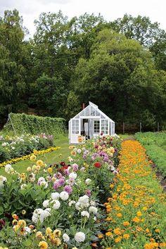 A cut flower garden