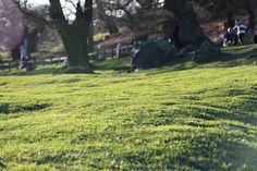 mech na trawniku Moss Lawn, Flotsam And Jetsam, Grass Seed, Tree Trunks, Water Systems, Oak Tree, Greenery, Plants, How To Make