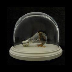 Polly Morgan - Small Still Birth / http://www.pollymorgan.co.uk
