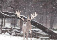#deerhuntinggear