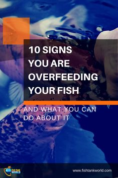 Feeding our aquarium fish is one of the most fun activities of aquarium keeping. But you need to be careful of not over feeding them as over feeding your fish can only bring troubles. Here are 10 signs to understand if your fish eat too much. Goldfish Care, Goldfish Aquarium, Tropical Fish Aquarium, Nature Aquarium, Aquarium Fish Tank, Planted Aquarium, Fish Tanks, Aquarium Stand, Fish Aquariums