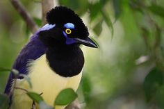 You Don't Have to Be a Nature Expert to Love It Names Of Birds, Nature Research, Urban Setting, Amazon Rainforest, Bird Species, Park City, Natural World, Ecology, Good News