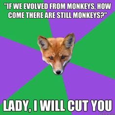 if we evolved from monkeys how come there are still monkey - Anthropology Major Fox