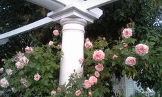 Lincoln roses on the West end of the colonnade.  (Prospect Valley Hospitality renovated historic 1872 property, Wheat Ridge, Colorado, USA)