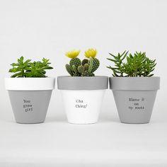 Painted Plant Pots, Succulent Pots, Succulents, Herb Pots, Clay Pots, Potted Plants, Flower Pots, Planters, Garden