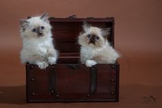 cute luggage by Marion Vollborn on 500px ragdoll kittens