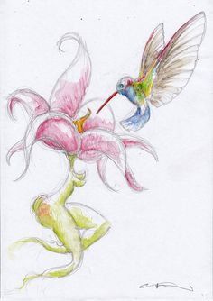 Hummingbird with Orchid