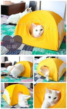 DIY 5 minute cat tent. This cat tent is super easy to make - you really just need a t-shirt, some wire hangers and a piece of cardboard. As a bonus, it really only takes five minutes, so if your cat ignores it you didn't put too much effort in. ;) #diy #crafts #cats #diycattentfun #catsdiycrafts #diycattenttshirts #cattentcardboard