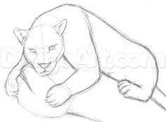 Drawing Step By Step how to draw a jaguar step 4 3d Drawings, Drawing Sketches, Drawing Guide, Pantera Animal, Animal Sketches, Animal Drawings, Cute Girl Sketch, Jungle Drawing, Easy Pencil Drawings