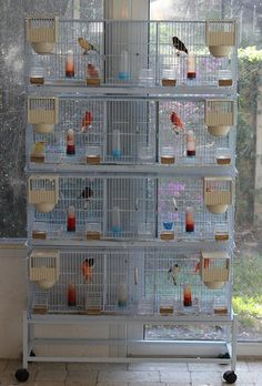 New Canary Breeding Cage With 3 Compartments in Tampa, Florida - Hoobly Classifieds