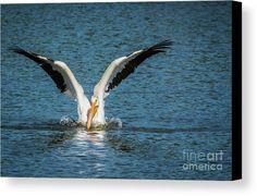 Pamela Williams Photography | Kansas City Photographer #wildlife #pelican #animal #photography #mississipiriver #photoofday