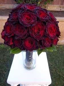 Black Baccara Rose..beautiful