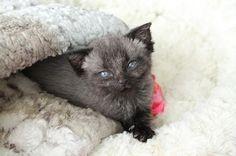 Week seven. #Brucethecat #Kitten www.brucethecat.co.nz