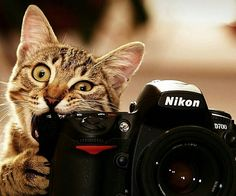 Photographer cat. Couldn't resist sharing this one.