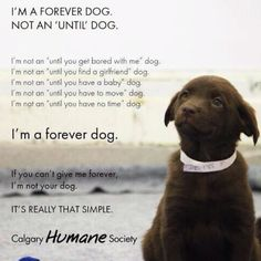 Commit to a pet for a life time.