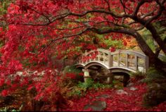 Japanese Garden, Royal Roads University, British Columbia Would love to go here and see this in person! Beautiful World, Beautiful Gardens, Beautiful Places, Beautiful Scenery, Beautiful Roads, British Columbia, Gardens Of The World, Royal Garden, Garden Types
