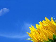 imagens de flores ZON   megapost - fondos de pantalla de paisajes