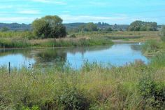 Forest of Marston Vale Wetlands Nature a Reserve, Marston Moretaine- adults £2.50, children £1.75