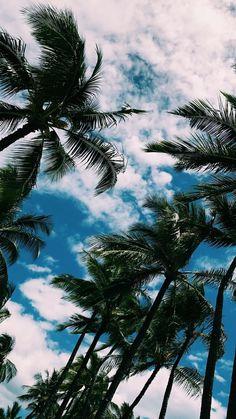 Iphone X wallpaper palm , beach, sky, aesthetic<br> Sunset Wallpaper, Tree Wallpaper, Cute Wallpaper Backgrounds, Pretty Wallpapers, Tumblr Wallpaper, Nature Wallpaper, Backgrounds Free, Unique Wallpaper, Wallpaper Ideas