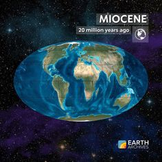 During the Miocene seen here 20 million years ago the Earth gradually cooled and ice caps formed over Greenland and Antarctica. Grasslands spread across the globe leading to diversification of grazing animals like camels horses and other hoofed mammals. Sperm whales and baleen whales or whales with large filters to eat plankton first arose during the Miocene. And the first hominins the group that includes modern humans originated in Africa at this time. #science #geology #paleontology…