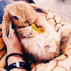 Animals – The Toledo Zoo &amp Super Cute Animals, Cute Baby Animals, Animals And Pets, Funny Animals, Cute Creatures, Beautiful Creatures, Animals Beautiful, Majestic Animals, Mundo Animal