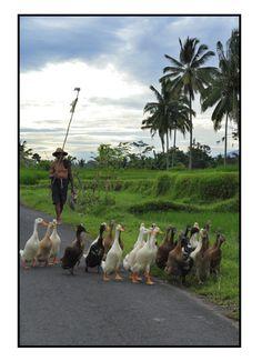 #Bali ... don't miss my #Bali travel ideas: http://topholidaysbali.com/