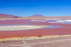 Laguna Colorada, Bolívia: a uma altitude de 4.278 metros acima do nível do mar, este é um dos mais b... - Shutterstock