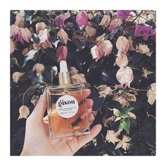 My honey jar filled with sunlight #gisou