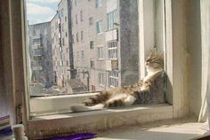 Funny: Cats sitting like humans