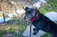 6 Dog Behavior Myths, Debunked