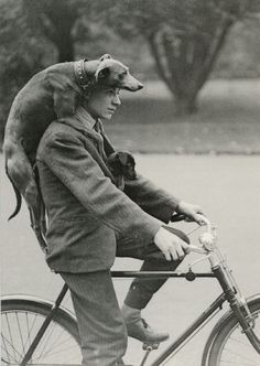 With only one dog, you can't ride with one on your back and one in your coat.
