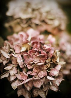 Autumn - I love when the Hydrangea is dried out but still on the bush... that's when I cut them to dry completely for a vase,basket/my Christmas tree