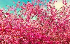 Картинки по запросу Цветущие  деревья