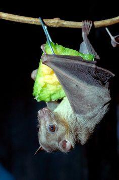 Batty about bats.