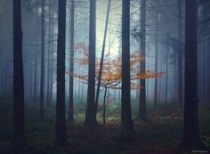 brothers-grimm-wanderings-landscape-photography-by-kilian-schonberger-13-677x499