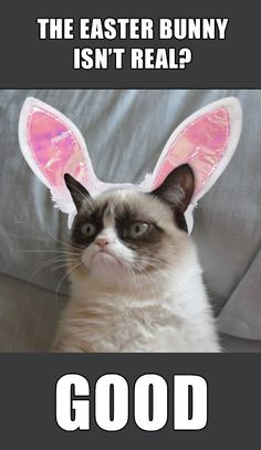 1000 images about funny grumpy cat on pinterest