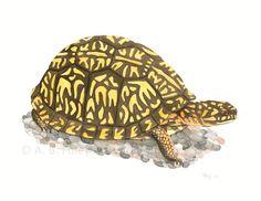 Giclee Print of Eastern Box Turtle illustration by ABFoleyArtworks #turtle #illustration #art #nature