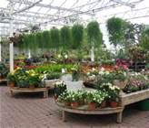 PLANT CENTER DISPLAYS FOR RETAIL - Bing Images