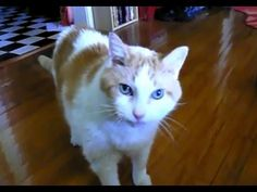 """Cats saying, """"hello"""" compilation"""