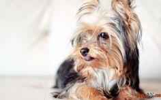 Foto perros más pequeños