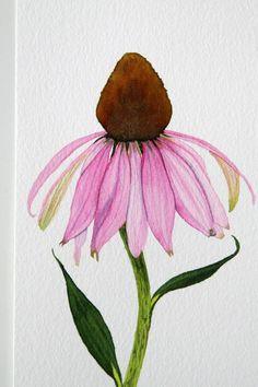 Light Pink Coneflower 2.jpg