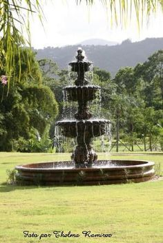 Vereda en jardin botanico caguas p r puerto rico for Bodas jardin botanico caguas