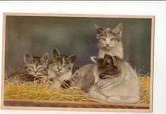 Mother Cat and Kittens resting Very nice by sharonfostervintage, $4.00