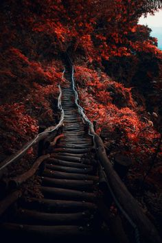 Dark Path by Hanson Mao Follow @travelgurus for the best Tumblr landscapes