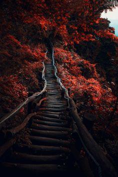Dark Path by Hanson Mao Follow @travelgurus for the best Tumblr landscapes