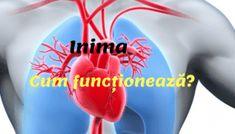 Inima și vasele de sânge. Cum sunt construite și cum funcționează? Healthy, Medicine, Health