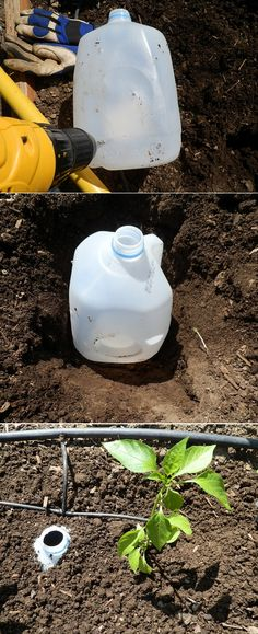 The best way to water your garden is to set up a drip irrigation system with an automatic timer. But what if you do not have that option?. If so, a great option is to bury a milk jug with holes drilled in it next to your plants. To water all you have to do is stick the hose in the top of the jug and fill up the milk jug and you are done! It also makes it easy to fertilize, add a scoup of fertilizer into the jug and add water and you are done!